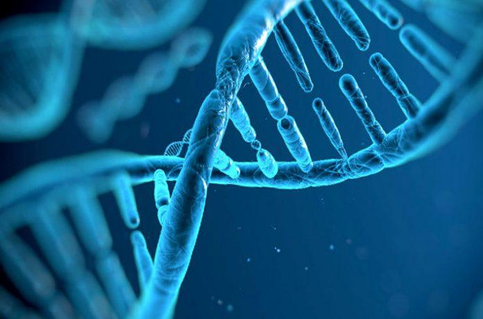 ADN modificado en una persona viva